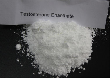 Power Gaining Testosterone Anabolic Steroid Testosterone Enanthate Powder